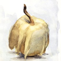 Gourd, watercolor on paper
